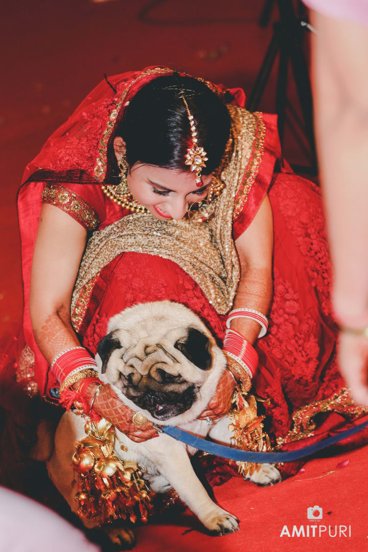 beautiful bride with cute puppy:amit puri photography