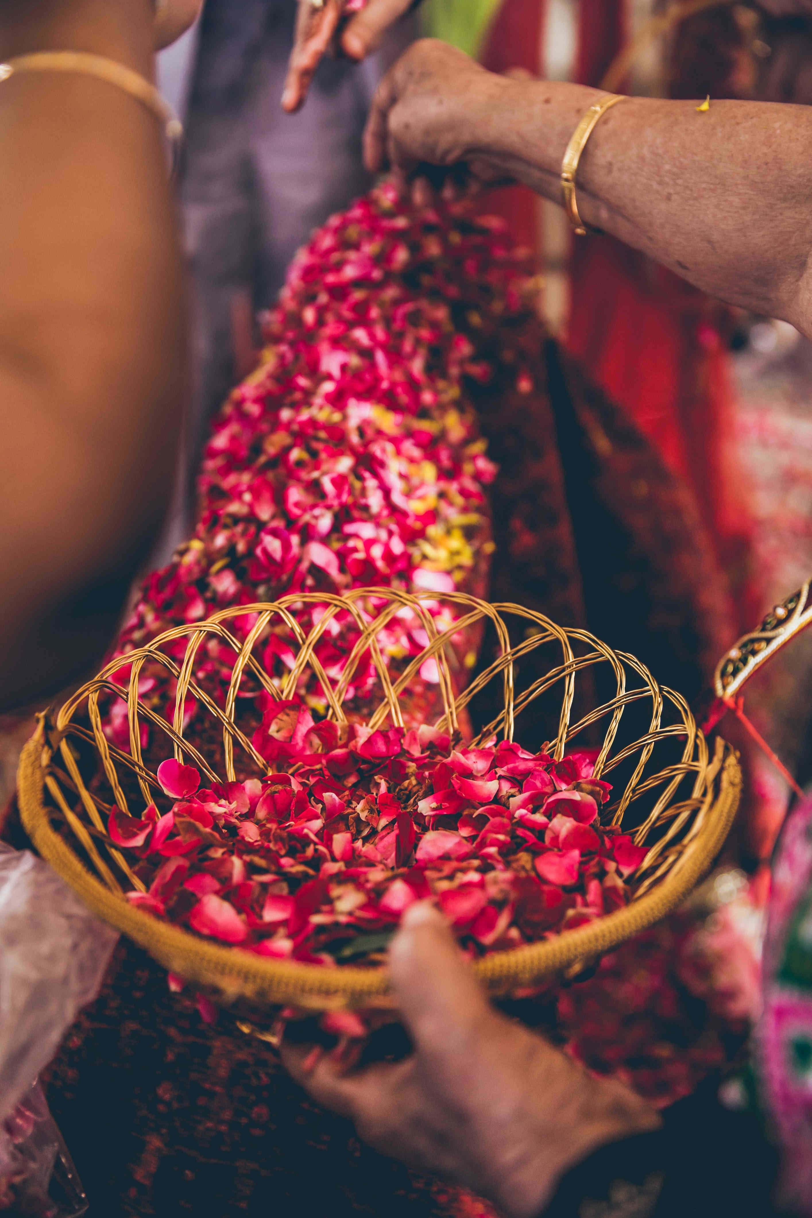 rain rose:nikhil kapur photography