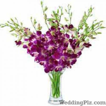 Ferns N Petals Florists weddingplz