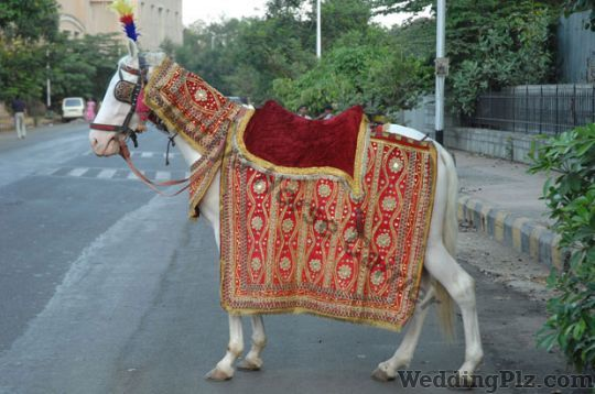 Supriya Horse Carrier Bands weddingplz