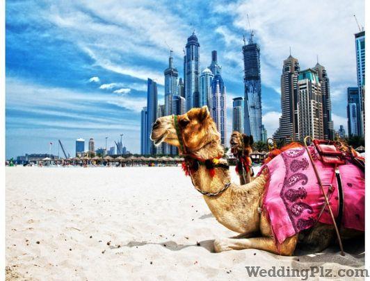 Amazing Adventures Travel Agents weddingplz